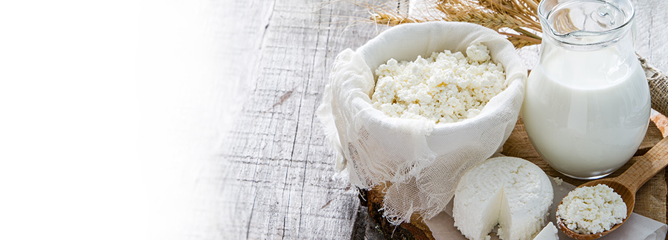 Probiotics used in traditional fermented food