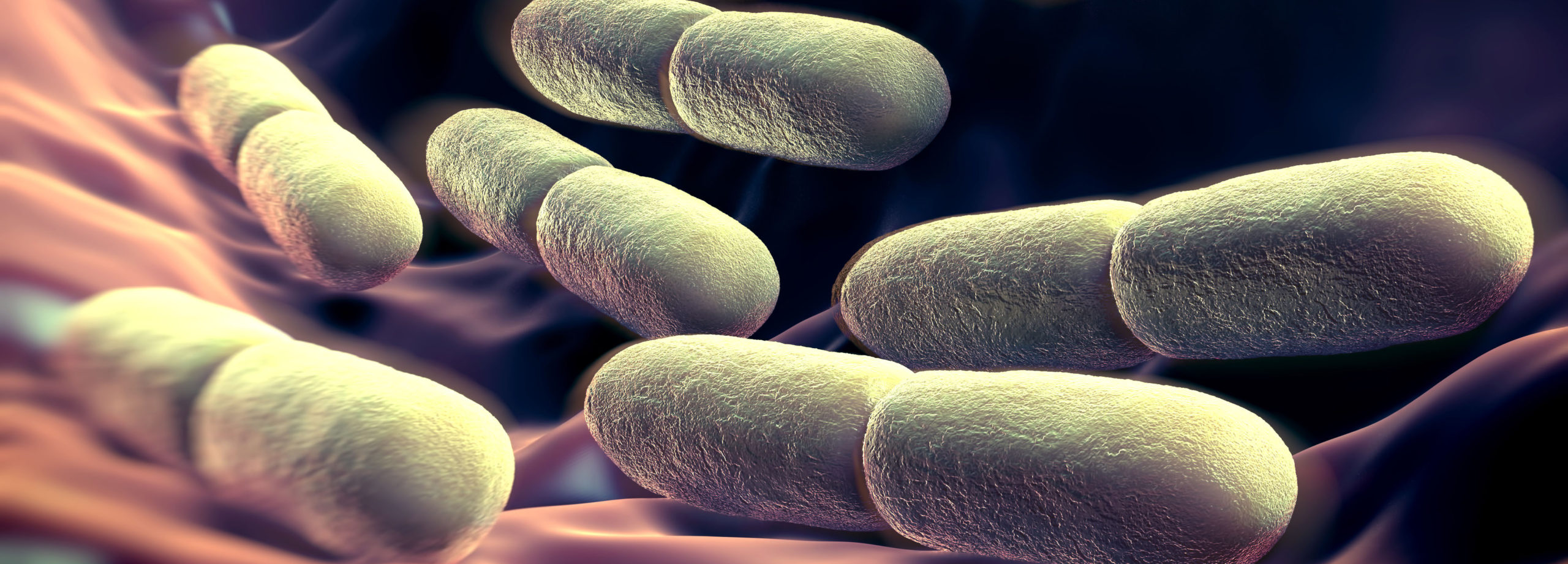 What do the changes to the Lactobacillus taxonomy mean to you & your business